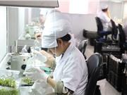 Nông nghiệp công nghệ cao Lâm Đồng: Không dễ quy hoạch