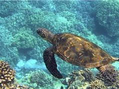 Biến đổi khí hậu tác động lớn tới sinh vật biển nhiệt đới