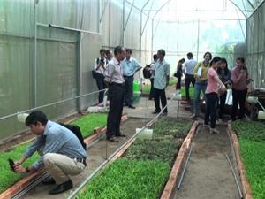Cần Thơ: Xây dựng mô hình chuỗi sản xuất rau non an toàn cho vùng rau