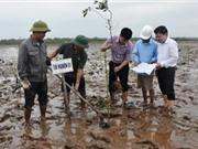 Nam Định: Gieo ươm và trồng cây bần không cánh - giải pháp góp phần phục hồi và phát triển hệ sinh thái rừng ngập mặn ven biển