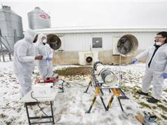 Công nghệ tiệt trùng dùng plasma lạnh tiêu diệt gần 100% vi rút