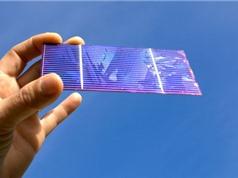 Kết hợp perovskite với silic, đột phá tăng công suất pin Mặt trời