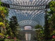 Thác nước trong nhà cao nhất thế giới tại sân bay Changi