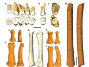 Phát hiện loài người cổ đại mới tại Philippines