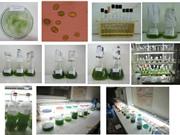 Nghiên cứu các chất thứ cấp có hoạt tính sinh học từ vi tảo biển ở vùng biển Trung Bộ