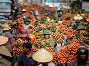 Vải thiều Lục Ngạn: Lựa chọn nào ngoài thị trường Trung Quốc?