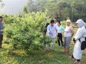 Bắc Kạn: Phát triển một số cây trồng hàng hóa tại xã Quảng Bạch, Tân Lập, huyện Chợ Đồn