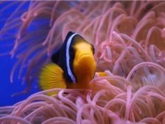 """Sinh vật biển đang bị biến đổi khí hậu """"tận diệt"""" nhanh hơn các loài sống trên đất liền"""