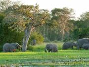 Nỗ lực đáng kinh ngạc phục hồi hệ sinh thái bị tàn phá ở Châu Phi