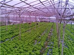 Nông nghiệp công nghệ cao: Cần góc nhìn tỉnh táo
