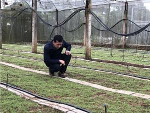 Lạng Sơn: Cây dược liệu bảy lá một hoa - Triển vọng nâng cao thu nhập