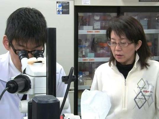 Nhật Bản: Chuyển hướng hợp tác nghiên cứu với châu Âu
