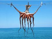 Hàng triệu người đang ăn một loài động vật thông minh nhất đại dương mỗi ngày
