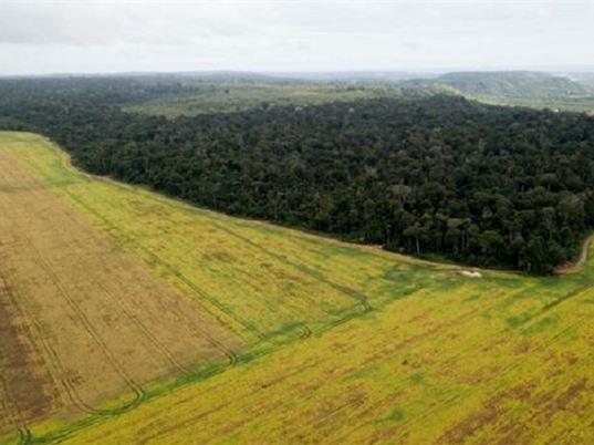 Chiến tranh thương mại ảnh hưởng tới hệ sinh thái rừng Amazon