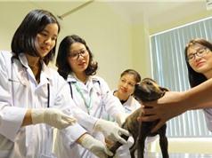 Phòng thí nghiệm trọng điểm CNSH thú y, HVNN Việt Nam: Tiên phong phát hiện dịch bệnh mới nổi