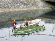 Nước sông Tô Lịch 'hồi sinh' sau một tuần 'giải cứu'