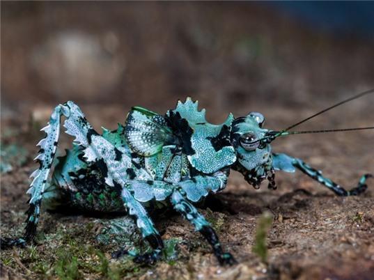 Thế giới côn trùng Việt Nam qua ảnh