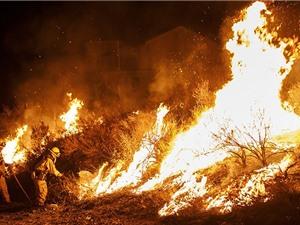 Nghiên cứu cháy rừng bằng cách… đốt rừng