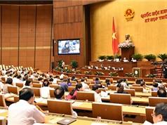 Quốc hội tán thành những sửa đổi trong Luật sở hữu trí tuệ
