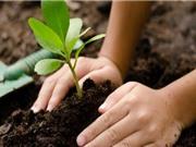 Học sinh Philippines phải trồng 10 cây xanh nếu muốn tốt nghiệp