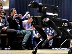 CEO Boston Dynamics muốn chó robot tham gia đấu trường