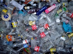 Trung bình có 210.000 hạt vi nhựa vào cơ thể người mỗi năm