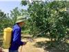 Nghệ An: Thử nghiệm, ứng dụng 1 số loại thuốc có nguồn gốc sinh học vào phòng trừ 1 số đối tượng sâu bệnh hại trên cây cam