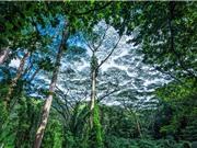 Tốc độ tuyệt chủng đáng báo động của các loài thực vật