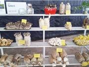 Giống nấm Việt đang thoái hóa nhanh