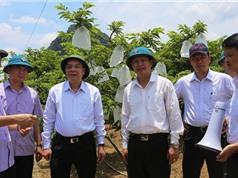 Đoàn công tác bộ KH&CN làm việc tại tỉnh Lạng Sơn