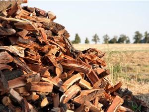 Cam kết sản phẩm gỗ trong mua sắm công là gỗ hợp pháp