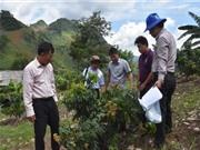 Sơn La: Kiểm tra tiến độ sinh trưởng, phát triển của một số giống xoài, nhãn tại huyện Thuận Châu