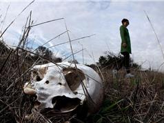 Trang trại tử thi ở Anh: Cuộc tranh cãi giữa tính khoa học và kinh dị