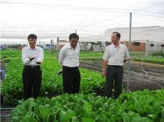 Đồng Nai: Chứng nhận mô hình sản xuất rau ăn lá trong nhà lưới đạt tiêu chuẩn VietGAP tại TP Biên Hòa: