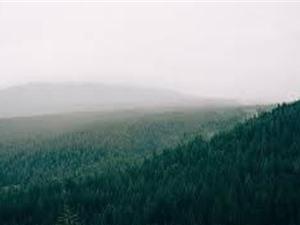 Có thể trồng thêm 0,9 tỉ ha rừng để kiềm chế tình trạng nóng lên toàn cầu