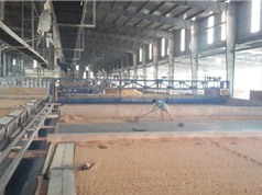 Tiết kiệm chi phí nhờ sấy lúa bằng máy vỉ ngang tự động