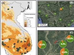 Cây sắn Việt Nam có nguy cơ mắc bệnh khảm lá sắn Sri Lanka