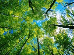 Việc trồng thêm cây để cứu lấy Trái Đất hóa ra khó hơn chúng ta nghĩ