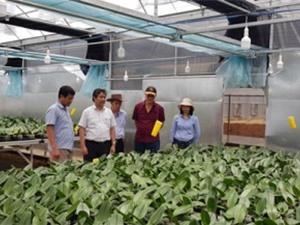 Quảng Trị: Hy vọng mới cho nhiều giống cây mang lại hiệu quả kinh tế cao tại Sa Mù, Hướng Hóa