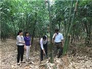 Lạng Sơn: Nghiên cứu nhân giống, trồng thâm canh và chế biến Măng Bát Độ tại huyện Hữu Lũng