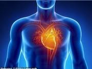 Phát hiện loại tế bào mới ở quanh tim