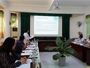 Phú Yên: Nghiên cứu tuyển chọn giống sắn năng suất tinh bột cao kháng được sâu bệnh hại chính phù hợp với điều kiện sản xuất