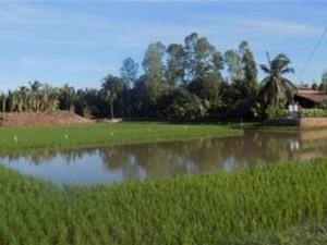 Bến Tre: Xây dựng mô hình sản xuất theo hướng lúa tiêu chuẩn hữu cơ trên vùng canh tác tôm - lúa huyện Thạnh Phú