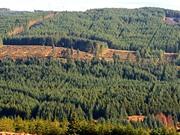 Ireland quyết tâm phục hồi 6.000 ha rừng tự nhiên