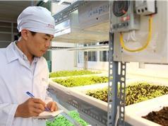 Hoàn thiện công nghệ nền tảng đèn LED trong nông nghiệp