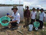 Kiên Giang: Nghiên cứu thử nghiệm ương giống và nuôi ghẹ xanh thương phẩm