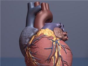 Phương pháp ghép tế bào gốc mới có thể giúp phục hồi tim bị tổn thương