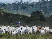 Liên Hợp Quốc kêu gọi giảm ăn thịt để khắc phục biến đổi khí hậu