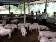 Hải Phòng: Ứng dụng công nghệ xử lý môi trường cho các trang trại chăn nuôi tập trung