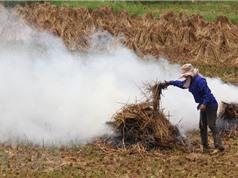 Xử lý phụ phẩm nông nghiệp: Đốt bỏ hàng chục ngàn tỷ đồng mỗi năm